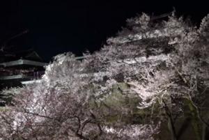 上田城 桜まつり ライトアップ