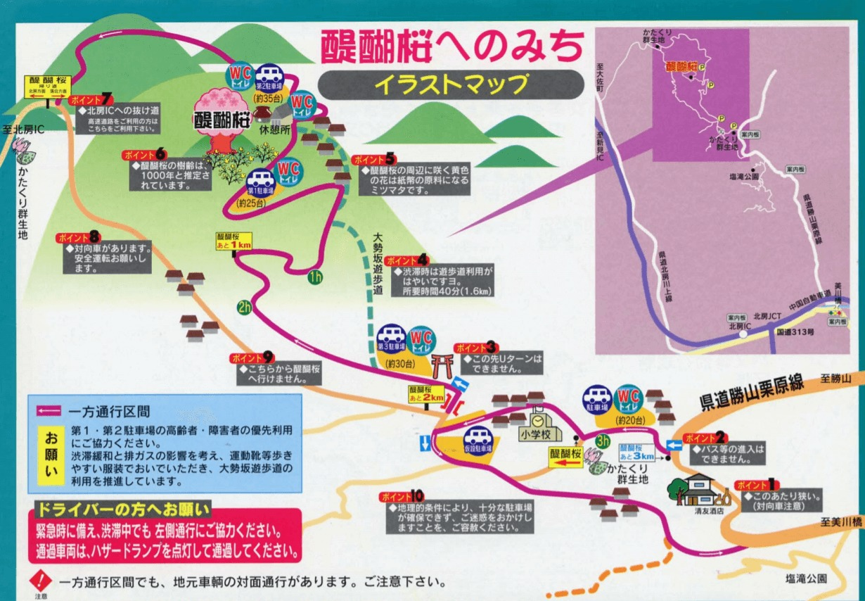 醍醐桜 詳細 地図