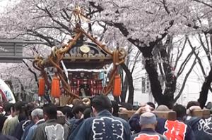 相模原市民桜まつり 神輿