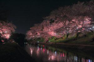 岡崎公園 夜桜