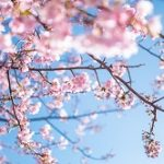 東京都内でお花見の穴場スポットはココ!名所ランキング。
