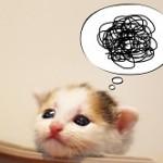 猫 自己嫌悪