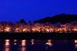 角館桜まつり お花見