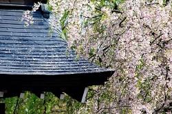 角館桜まつり アクセス