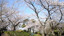 野毛山公園 横浜
