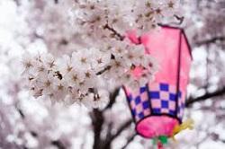 相模原市民桜まつり 素敵