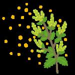 ブタクサ花粉症の症状と対策。季節や時期は?少ない地域は?