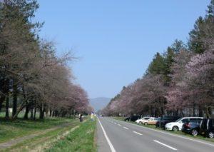 静内二十間道路桜並木 青空