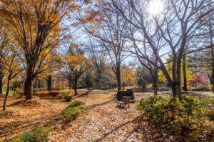 公園 落ち葉の絨毯