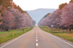静内二十間道路桜並木 道路