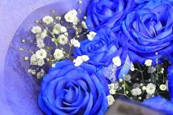 青いバラ 夢が叶う