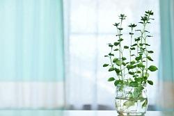 植物 生き物
