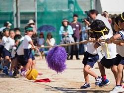 綱引き 運動会