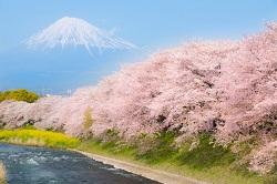風物詩 富士山