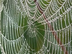 蜘蛛の巣 原因