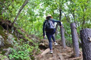 新緑の山を登山する女性