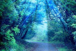 神秘 木漏れ日 森