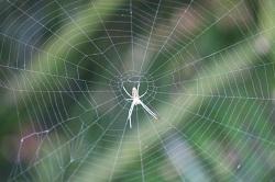 蜘蛛 活動