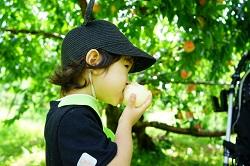 桃狩り 桃を食べる男の子