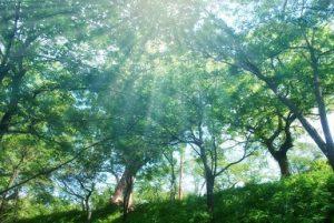森林 日光 木漏れ日