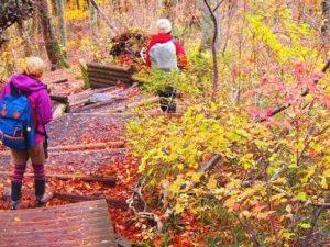 紅葉の山を登山する女性たち