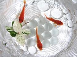 金魚 長生き
