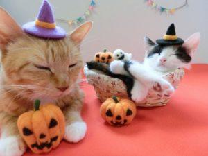 ハロウィン 猫 親子 かぼちゃ