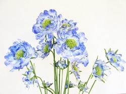 お供えの花 イラスト