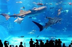 水族館 巨大水槽 ジンベイザメ