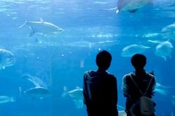 水族館 デート