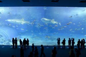 水族館 巨大水槽