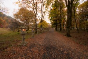 奥日光 紅葉絨毯の道