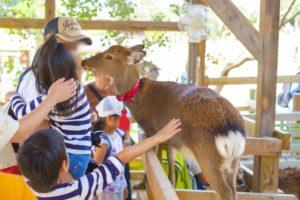 愛知牧場 子供の鹿