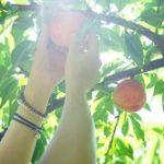 栃木県桃狩り人気おすすめランキング2020!時期や食べ放題は?