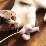猫の抜け毛の原因と対策。ひどい時期は病気やアレルギー?