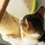 猫 爪とぎ 対策