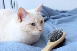 猫 換毛期