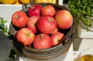 りんご 摘みたて