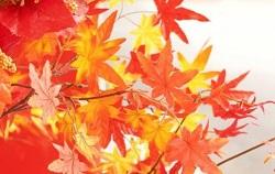 紅葉 温泉