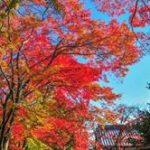 天龍寺の紅葉2019の見頃時期!庭園や雲龍図の参拝料や時間は?駐車場は?