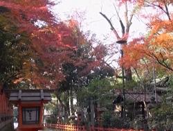 八坂神社 紅葉 見どころ