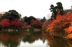 京都御苑 紅葉 見どころ