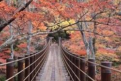 花貫渓谷 紅葉 見どころ