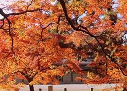 京都御苑 紅葉 スポット