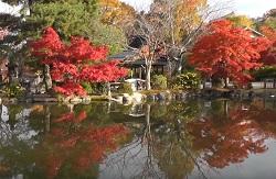 八坂神社 紅葉 散策