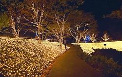 ネスタリゾート神戸イルミネーション 見どころ