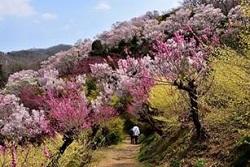 花見山公園 ペット