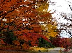 京都御苑 紅葉 アクセス