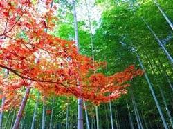 天龍寺 嵐山 観光