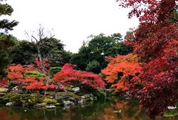 京都御苑 紅葉狩り